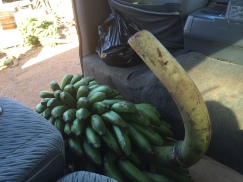 Some bananas bought from the market on the way to Kaka's