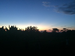 Sunset over the matooke plantation at Kaka's